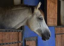 abri chevaux